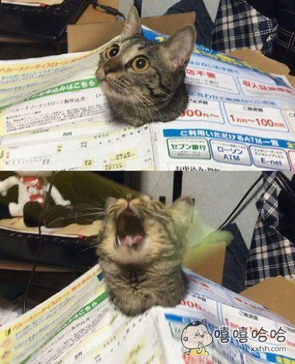 一位主人表示,自家猫咪看到新运来的快递箱子,立刻兴奋地钻了进去,凿破包