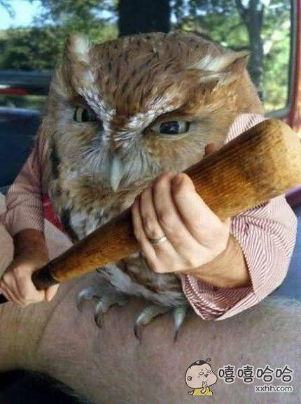 别惹猫头鹰
