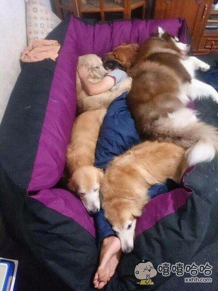 推主kiwamin714表示自己每一次睡觉都会有狗狗陪伴