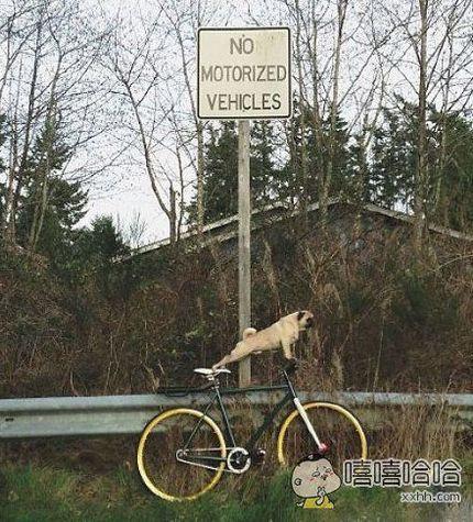狗狗身手不错