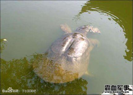 江西省分宜县严嵩洞内发现千年神龟 - 满山红叶 - 满山红叶博客