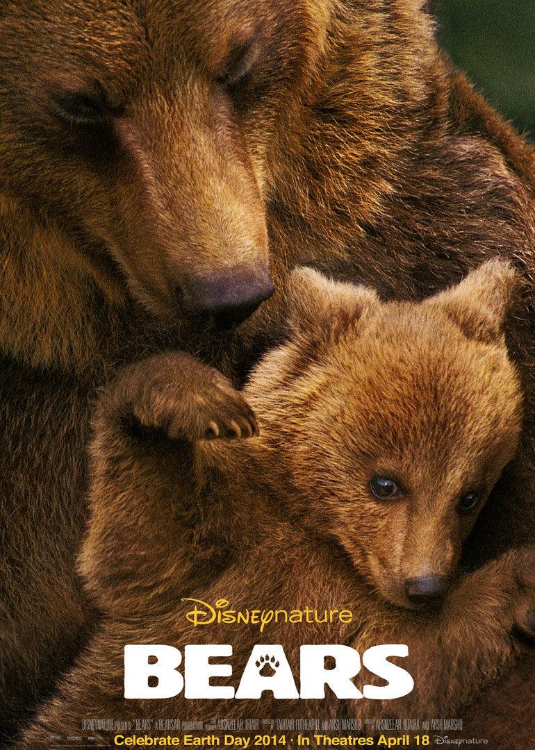 阿拉斯加的棕熊