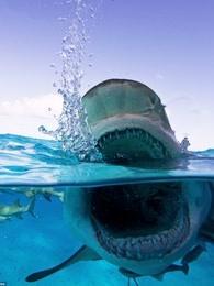 鲨鱼周之深夜谈鲨鱼