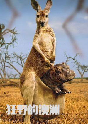 狂野的澳洲
